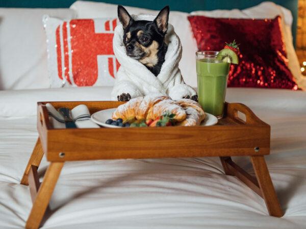 Se busca perro crítico de hoteles para viajar por el mundo
